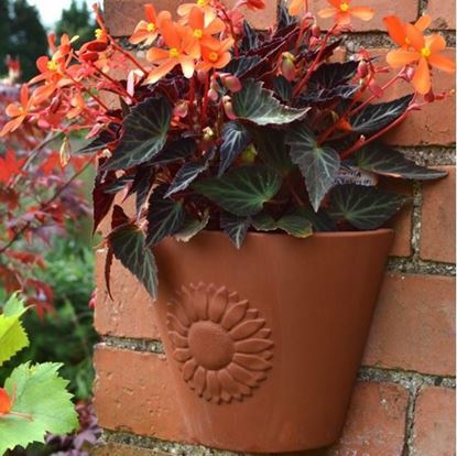 Picture of Sunflower Wall Pot