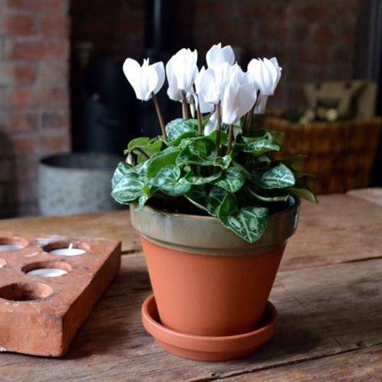 Picture of Terracotta Flower Pot & Saucer - 13cm - Green Glazed