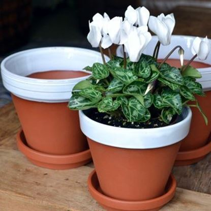 Picture of Terracotta Flower Pot & Saucer - 13cm - White Glazed