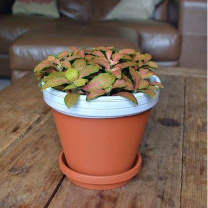 Picture of Terracotta Flower Pot & Saucer - 15cm - White Glazed
