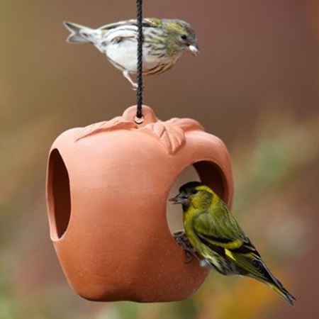 Picture for category Bird Feeders