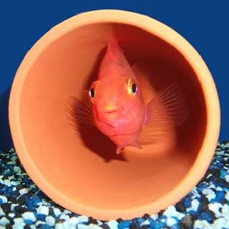 Picture for category Fish Tubes & Fish Caves