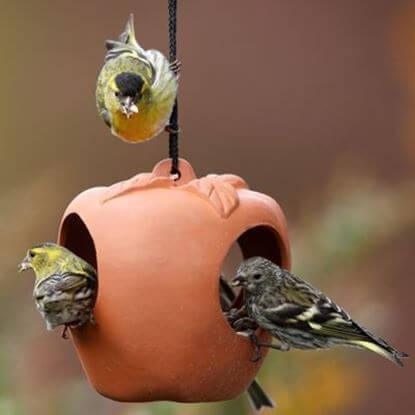 Picture of Apple Bird Feeder