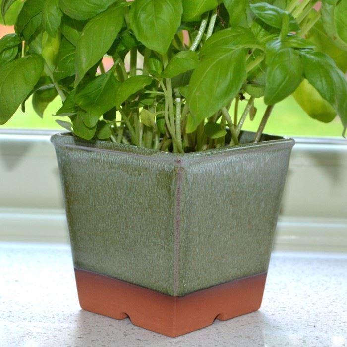 Windowsill Herb Planter: Windowsill Herb Pot - Apple Green