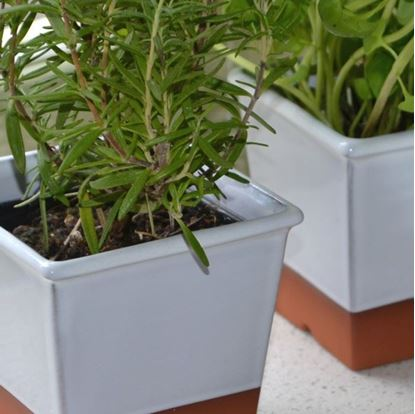 Picture of Windowsill Herb Pot - White