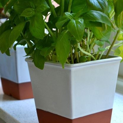 Picture of Windowsill Herb Pot - Cream