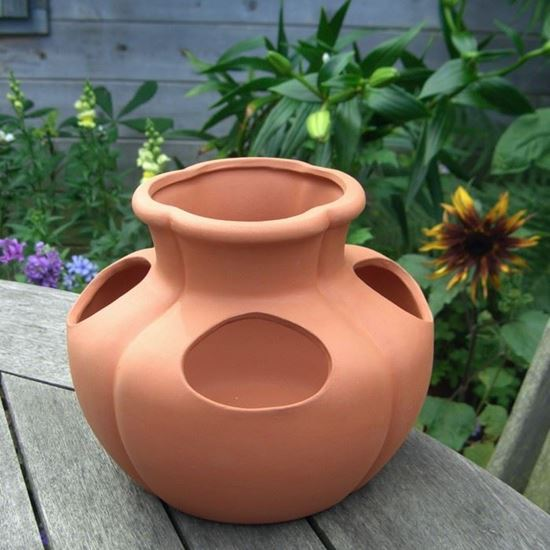 Picture of Strawberry Herb Pot
