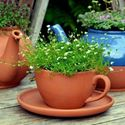 Picture of Teacup Planter - Small