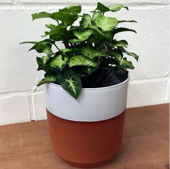 Picture of Chamfer Cache Pot Large - Translucent White Glazed
