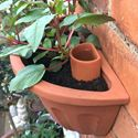 Picture of Wall Pot Waterer