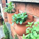 Picture of Small Herb Wall Pots
