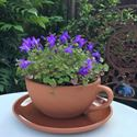 Picture of Teacup Planter - Large