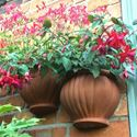 Picture of Malay Wall Pot