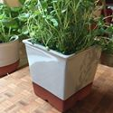 Picture of Windowsill Herb Pot - Pale Grey
