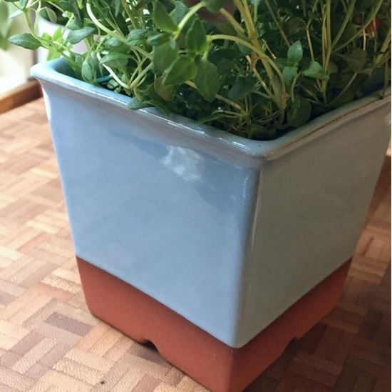 Picture of Windowsill Herb Pot - Pale Blue