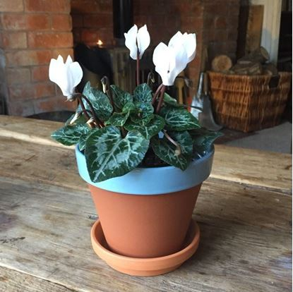 Picture of Terracotta Flower Pot & Saucer - 13cm - Pale Blue Glazed