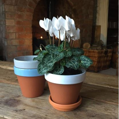Picture of Terracotta Flower Pot & Saucer - 11cm - White Glazed