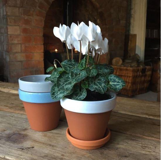 Picture of Terracotta Flower Pot & Saucer - 11cm - White Glazed