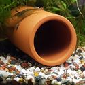 Picture of Fish Cave - 4cm Diam. | One Sealed End