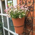 Picture of Long Tom Wall Planter