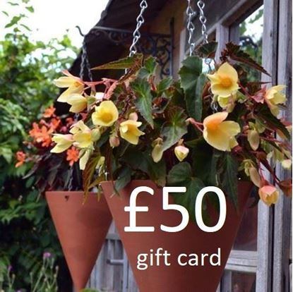 Picture of £ 50 Virtual wmpot Gift Card