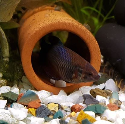 Picture of Fish Tube - 4cm Diam. | Open Both Ends