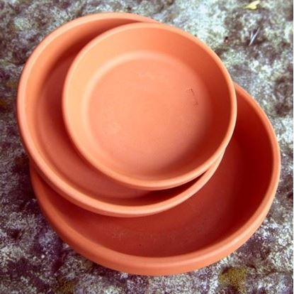 Picture of Saucers 15cm - Pack of 5